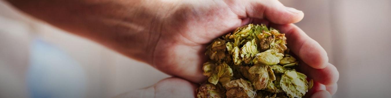 sabor y materias primas bierkonig